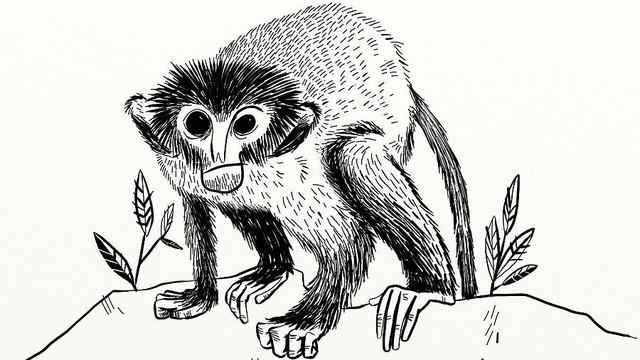 The 13th Monkey